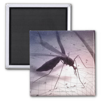 Illustration of a mosquito biting square magnet
