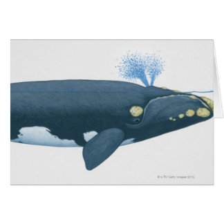 Illustration of North Pacific Right Whale Card