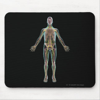 Illustration of the nervous system mouse pad