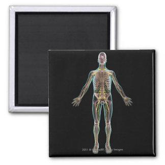 Illustration of the nervous system square magnet