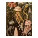 Illustration vintage de méduses d'antiquité de méd carte postale