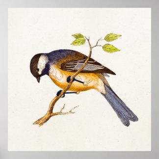Illustration vintage d'oiseau de chanson - oiseaux poster