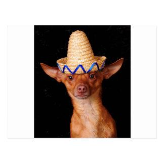 I'm a dog, not a Mexican! Postcard