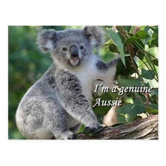 I'm a genuine Aussie: cute cuddly Australian koala Postcard