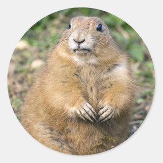 I'm Not Fat, I'm Cuddly Sticker