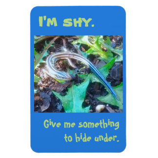 """I'm Shy"" Five-Lined Skink (Lizard) 4x6 Magnet"
