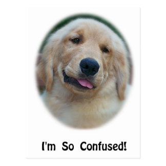 """""""I'm So Confused"""" Funny T-Shirts & Gifts Postcard"""