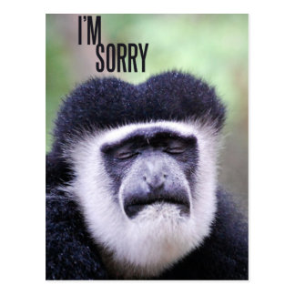 I'm sorry Monkey Postcard