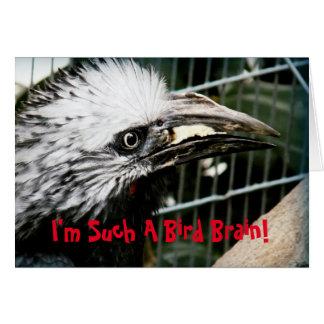 I'm Such A Bird Brain Funny Belated Birthday Card