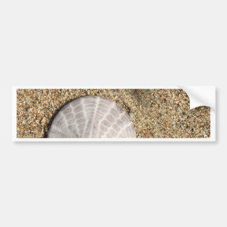 IMG_0578.JPG  Sandollar seashell on beach Bumper Sticker