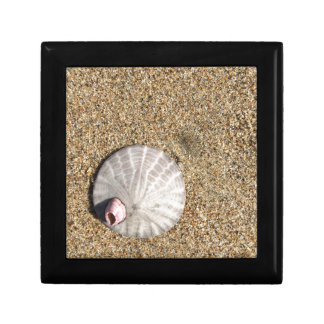 IMG_0578.JPG  Sandollar seashell on beach Gift Box