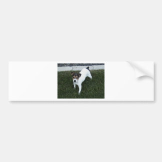 IMG_1349.JPG Adorable Jack Russell puppy dog Bumper Sticker