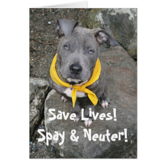 IMG_6802 Save Lives Spay Neuter Greeting Card