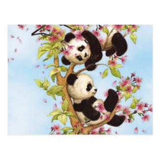 IMG_7386.PNG  cute and colorful panda designed Postcard