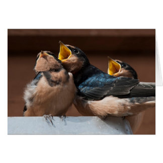 Immature Barn Swallow (Hirundo Rustica) Card