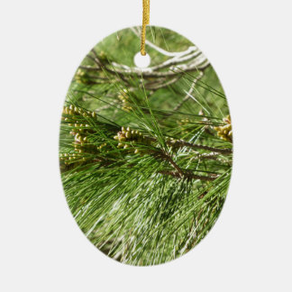 Immature male or pollen cones of pine tree ceramic oval ornament