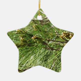 Immature male or pollen cones of pine tree ceramic star ornament