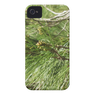 Immature male or pollen cones of pine tree iPhone 4 cases