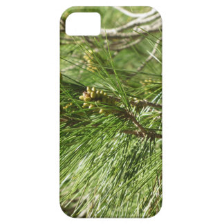 Immature male or pollen cones of pine tree iPhone 5 cases