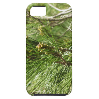 Immature male or pollen cones of pine tree iPhone 5 cover