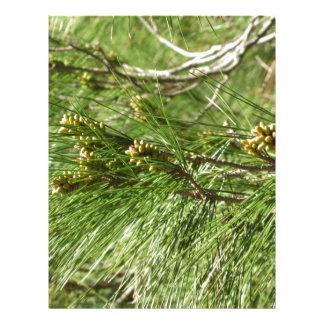 Immature male or pollen cones of pine tree letterhead