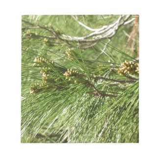 Immature male or pollen cones of pine tree notepad