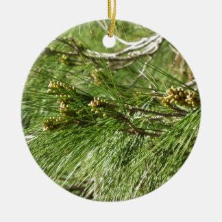 Immature male or pollen cones of pine tree round ceramic ornament
