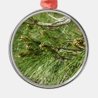 Immature male or pollen cones of pine tree Silver-Colored round ornament