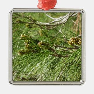 Immature male or pollen cones of pine tree Silver-Colored square ornament