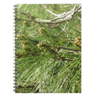 Immature male or pollen cones of pine tree spiral notebook
