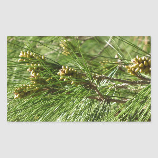 Immature male or pollen cones of pine tree sticker