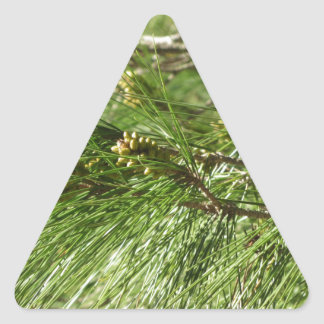 Immature male or pollen cones of pine tree triangle sticker