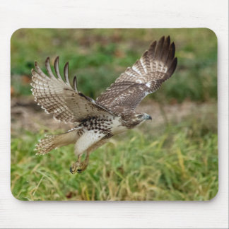Immature Red Tailed Hawk Mouse Pad
