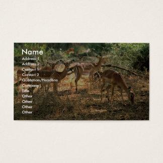 Impala Business Card