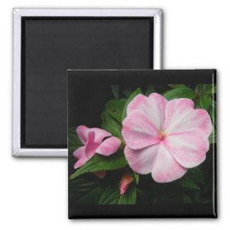 Impatiens Pink White Magnet
