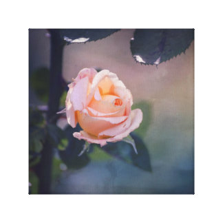 Imperfect Peach Rose in Soft Background Canvas Print