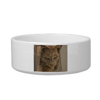 Impressive Lynx Cat Bowls