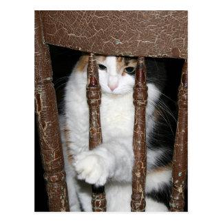 Imprisoned Postcard