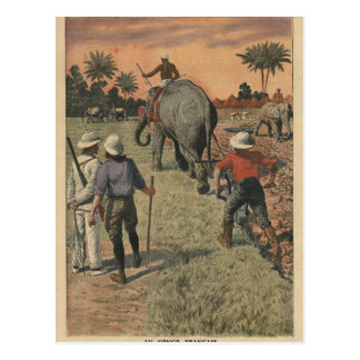 In French Congo, elephant trained to ploughing Postcard