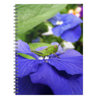 In Hiding Notebooks