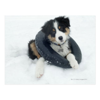 in inner tube in the snow postcard
