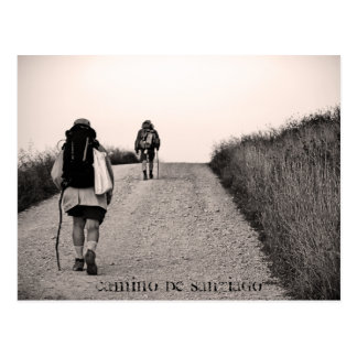 In search, Camino de Santiago Postcard