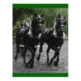 In Step -- Draft Horses Postcard