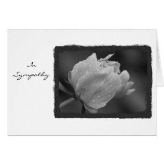 In Sympathy Peony 1 Greeting Card
