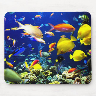 In the fund of the sea mouse pad