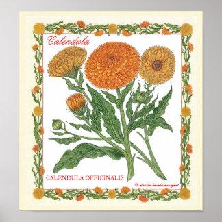 In The Garden ~ Calendula Poster