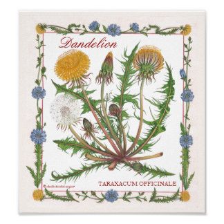 In the Garden ~ Dandelion Poster