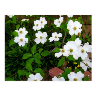 In The Garden ~ Dogwood Blossoms Postcard