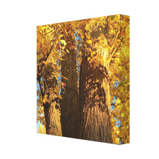 In the Glow of Golden Maple Leaves - Canvas Print