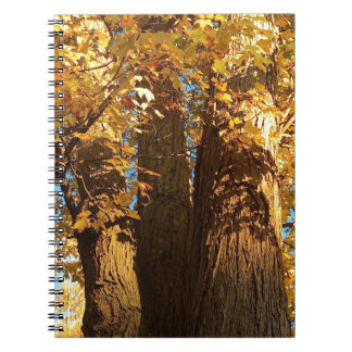In the Glow of Golden Maple Leaves - Notebooks